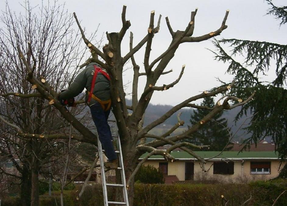 C'est le moment de tailler et d'élaguer vos arbres !